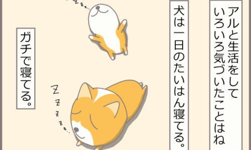 コーギーアルんち:アルは一日のたいはんを寝ている