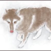 コーギーアルんち:ジッと見てくるハスキー犬