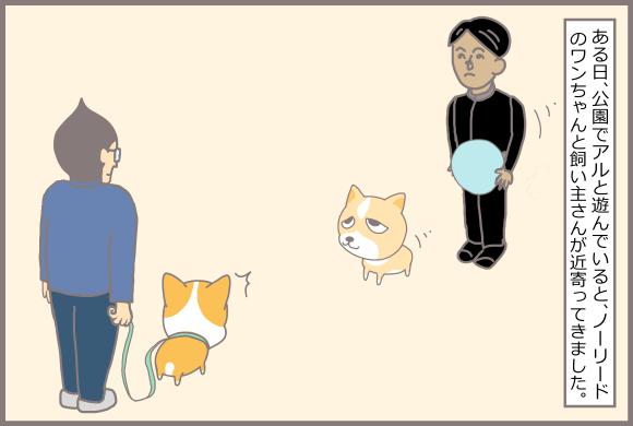 コーギーアルんち:ノーリードの飼い主さん登場