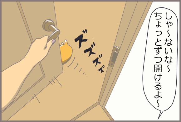 コーギーアルんち:アル、開けるよ~