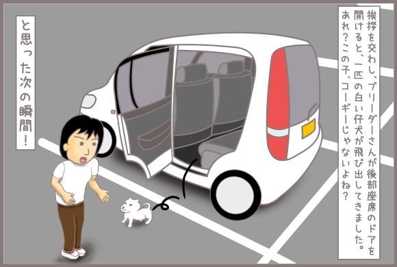 コーギーアルんち:仔犬が車から飛び出してきた