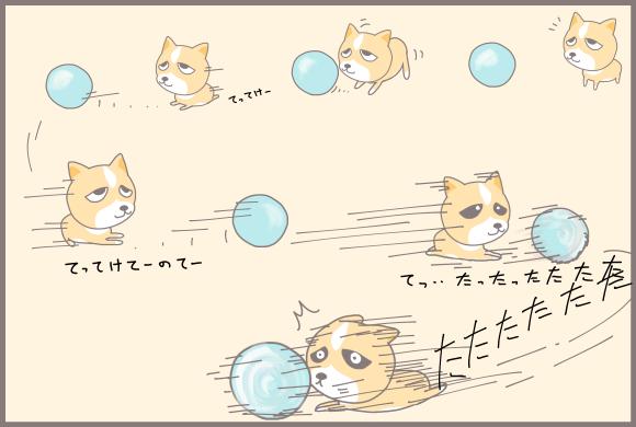 コーギーアルんち:ボールさばきを見せてくれるワンちゃん