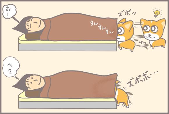 コーギーアルんち:布団に鼻先を突っ込むアル