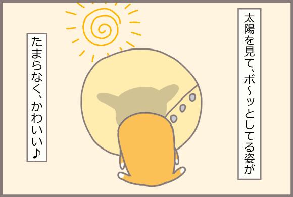 コーギーアルんち:太陽の光でカラーにアルの影が映るこのシルエットがお気に入り